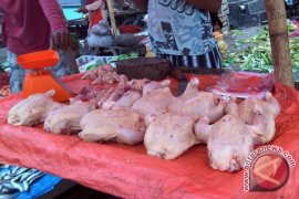 Harga ayam potong di Mukomuko Rp50.000