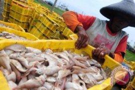 Nilai ekspor nontimah Babel ke Singapura turun