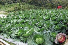 Indonesia mampu kurangi ketergantungan impor sayur