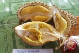 Durian juara