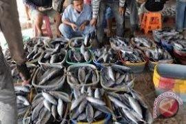 Harga Ikan Kerapu di Sangatta Turun