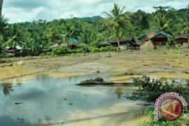 Banjir surut petani minta benih unggul