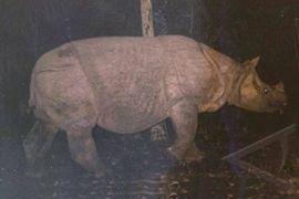 Seekor badak jantan ditemukan mati TN Ujung Kulon, penyebab masih diselidiki