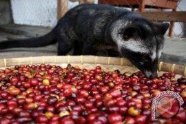 Ekspor biji kopi Lampung naik