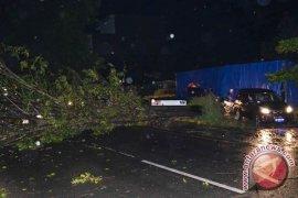Sejumlah pohon tumbang akibat badai di Bengkulu