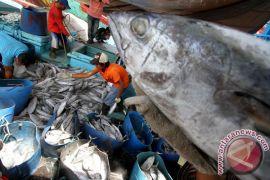 Nelayan Gunung Kidul panen ikan tuna super