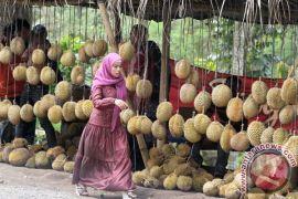 Durian Kasembon, si legit dari Jawa Timur