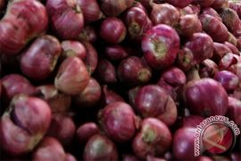 Harga bawang merah Rp50 ribu per kilogram