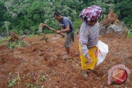 Caleg: Babel Kembangkan Komoditas Perkebunan Unggulan