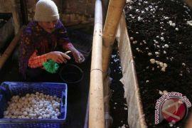 Tahukah anda jamur bisa lawan penyakit usia lanjut?