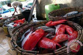 Enam jenis ikan diusulkan peroleh sertifikat MSC