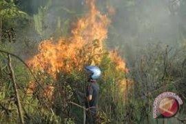 Polhut Bangka Tingkatkan Patroli Awasi Kebakaran Hutan
