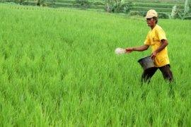 Pencabutan Subsidi Pupuk Tidak Pengaruhi Produksi