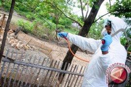 Ini Daerah Rawan Penyebaran Flu Burung Di Sukabumi