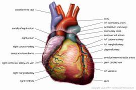 Transplantasi hati jalan satu-satunya atasi gagal hati