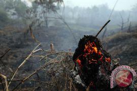 Empat hektare lahan gambut di Kabupaten Pelalawan terbakar