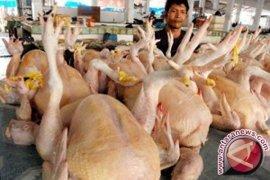 Kenaikan harga ayam di Bekasi paling mencolok