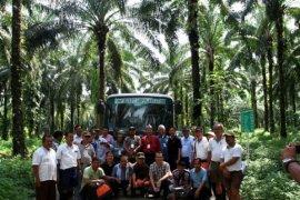 Dinas Koperasi Malut bangun pengelolaan minyak kelapa