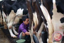 Aturan label harus dorong penyerapan susu lokal
