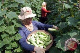 Masih ada10 ribu hektare lahan Karawang untuk palawija
