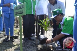 Gubernur : selamatkan hutan mangrove Bengkulu