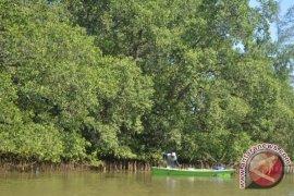 25.000 hektare hutan mangrove beralih fungsi