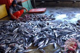 Ikan kayu Sulut makin diminati pasar internasional