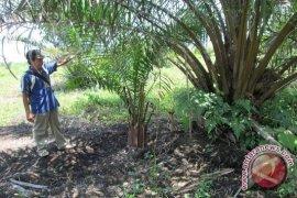 Petani Seluma desak pemprov selesaikan konflik agraria