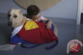 Anjing terapi hibur korban penembakan Las Vegas