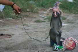 50 satwa topeng monyet disita di Jabar