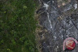 381 spesies baru ditemukan di Hutan Amazon