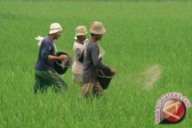 Kalbar Masih Kekurangan Balai Penyuluh Pertanian