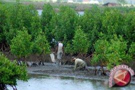 Wisata Mangrove Sedari Karawang Akan Dikembangkan
