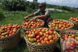 Lewat politeknik, Kementan bakal cetak wirausaha pertanian