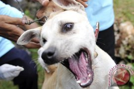Anjing Liar Penyerang Warga Sukabumi Diburu