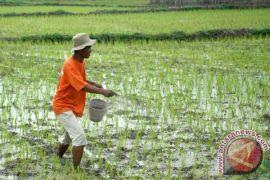 Petani Temanggung kesulitan dapatkan pupuk