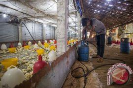 Koreksi kenaikan harga elpiji disambut baik peternak