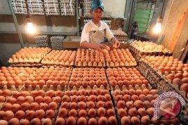 harga telur di ternate naik