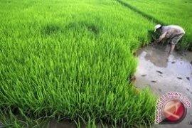 Bendungan Way Apu dukung swasembada beras