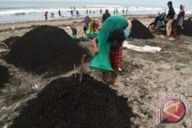Pantai Jakat masih tercemar limbah batubara