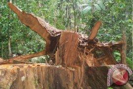 KPHA: 345 Aktivitas Ilegal Logging di Aceh