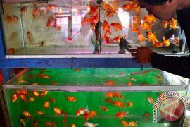 Ikan hias miliki pangsa pasar potensial