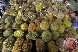 Ribuan warga Kediri berebut durian gratis