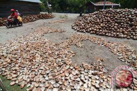 Pemerintah diharapkan perkuat produksi kelapa