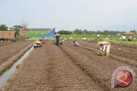Petani Kembangkan Pangan Organik