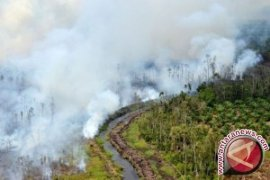 90 tersangka pembakar hutan Riau ditangkap polisi