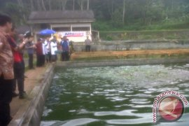Bekasi Sosialisasikan Pakan Ikan Alternatif