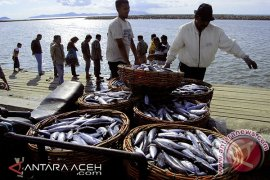 Harga Ikan Tongkol Anjlok di Aceh Utara