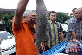 Singapura sita gading 300 gajah tujuan Vietnam