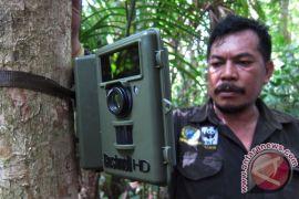 Empat anak badak jawa tambah populasi di Taman Nasional Ujung Kulon